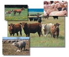 Know Your Options, Goals and Resources When Livestock Farming